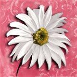 Blooming Daisy III Art Print