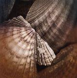 Ocean Treasures I Art Print