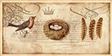 Nesting II Art Print
