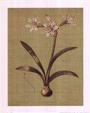 Botanica Verde I Art Print