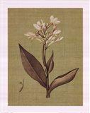 Botanica Verde II Art Print