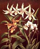 Orchid Trio I Art Print