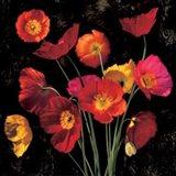 Poppy Bouquet II Art Print